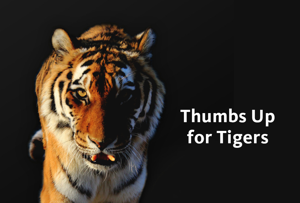 Global Tiger Day 29 July 2016